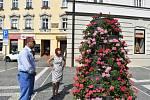 Květinové pyramidy v Prostějově
