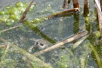 V nádrži se vyskytují vzácné a ohrožené druhy obojživelníků.
