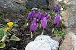 Jaro na Prostějovsku
