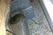 Myš v prostějovském Kauflandu
