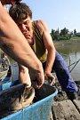 Odlov ryb na plumlovské přehradě - sumec s cejnem v hubě