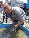 Odlov ryb na plumlovské přehradě
