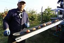 Česání jablek v dětkovických sadech