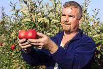 Česání jablek v dětkovických sadech - vedoucí ovocnář Pavel Melka