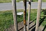 Neznámý vandal poškodil mladou výroční lípu ve Smetanových sadech. 24.4. 2020