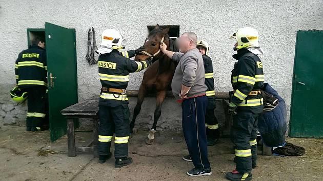 Olomoučtí a olšanští hasiči si zpestřili 1. vánoční svátek zásahem v Bystročicích. Zachraňovali zde zaseknutého koně.