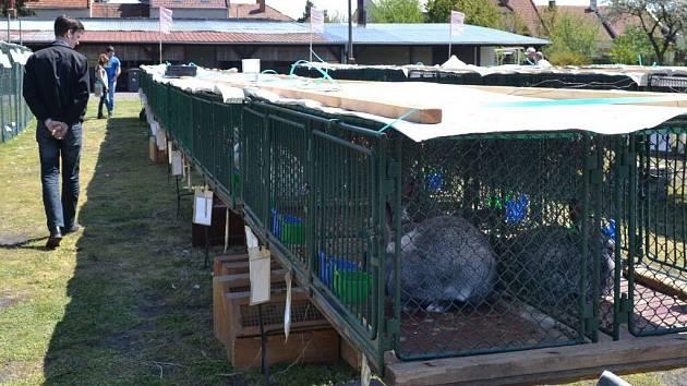 Výstava drobného zvířectva v Držovicích