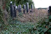 Zatím se ještě židovský hřbitov v Prostějově topí v divoké vegetaci. Brzy by se to mělo změnit.