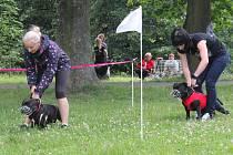 V zámeckém parku v Čechách pod Kosířem si zatrénovaly desítky psů