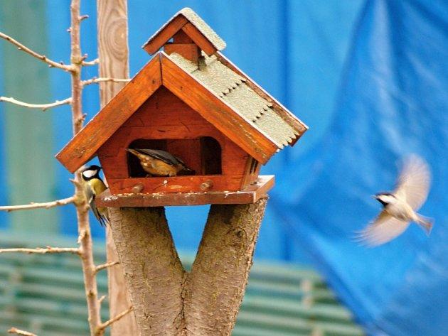 Slet ptačích strávníků ukrmítka. Ilustrační foto