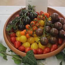 zelenina ilustrační foto