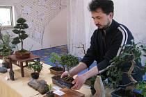 Výstava bonsají ve Vrbátkách