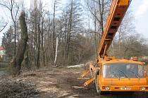 Kácely se stromy v Olomoucké zbytečně?