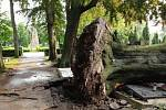 Následky bouřky z 1. července 2019 na městském hřbitově v Prostějově