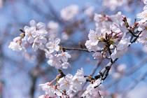 Květen - Máj - Lásky čas