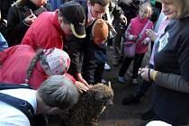 Gepardice v olomoucké zoo