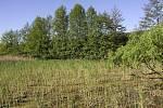 Tůň po zimním kosení rákosiny v přírodní památce Mokřad Pumpák v roce 2003.