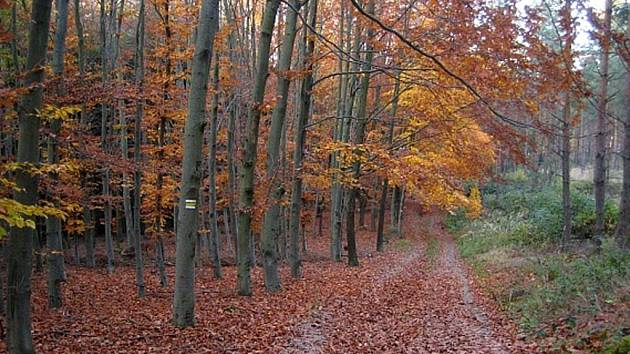 Podzim na Kosíři