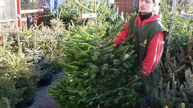 Janis Abu Akel při prodeji vánočních stromků v Prostějově