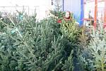 Prodej vánočních stromků v Prostějově