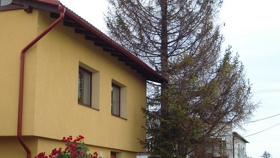 Lýkožrout sežral vánoční strom ve Vrchoslavicích