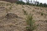 Nová výsadba a polomy v lesích v blízkosti Seloutek