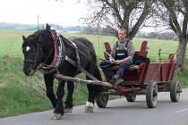 Koňský potah na silnici