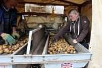Sklizeň brambor ve Vrbátkách na Prostějovsku