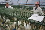V Prostějově ukázali chovatelé své klenoty. Holuby a králíky.