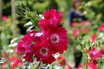 Rozárium v prostějovské botanické zahradě