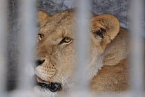 Cirkus Humberto má ve svém vlastnictví desítky zvířat