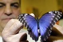 Výstava tropických motýlů v prostějovské Mozaice