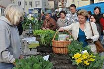 Na městké tržnici v Prostějově už začal prodej zeleninových přísad