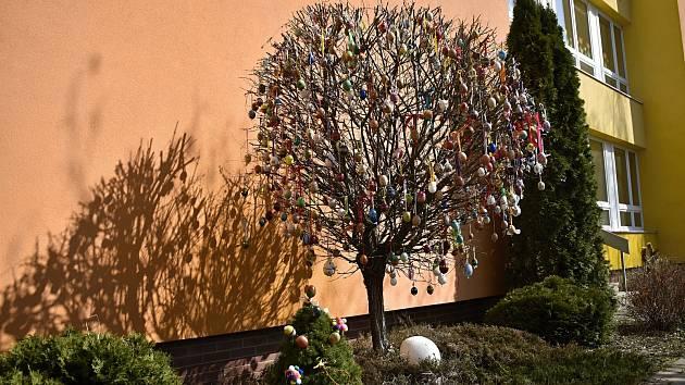 Parádní velikonoční strom mají zásluhou dětí a vychovatelek školní družiny na prostějovské škole v Melantrichově ulici.
