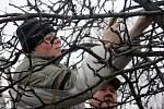 Praktický nácvik ořezávání ovocných stromů v Dubanech