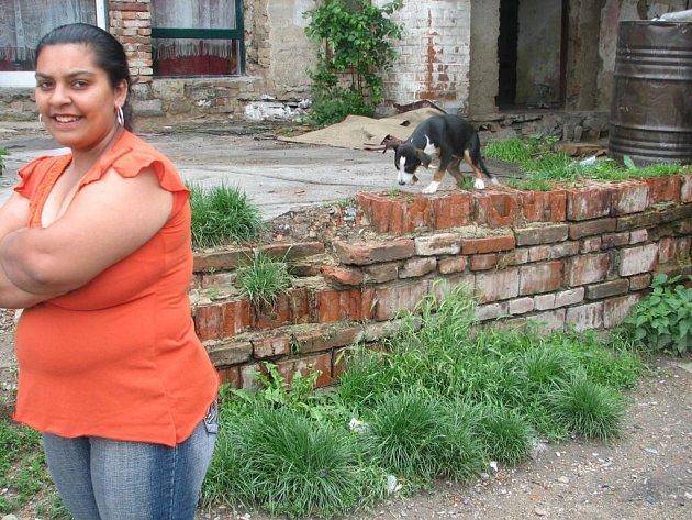 Romové tvrdí, že jejich zvířata jsou neškodná.