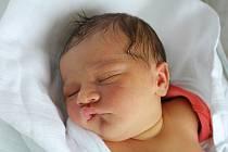 Tereza Pazderová,Prostějov, narozena 17. července, míra 51 cm, váha 3750 g