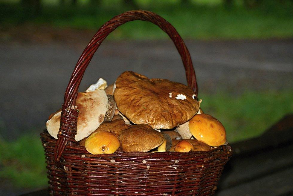 Houbaření na Prostějovsku v červenci 2020 - plný košík hub