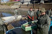 Výlov Podhradského rybníka v Plumlově