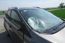 Srážka auta se zvěří. Ilustrační foto.
