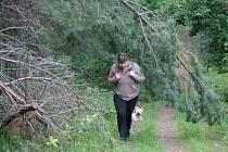 Popadané stromy v Seloutském lese