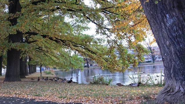 Uprostřed rybníka vznikne ostrůvek pro vodní ptáky.