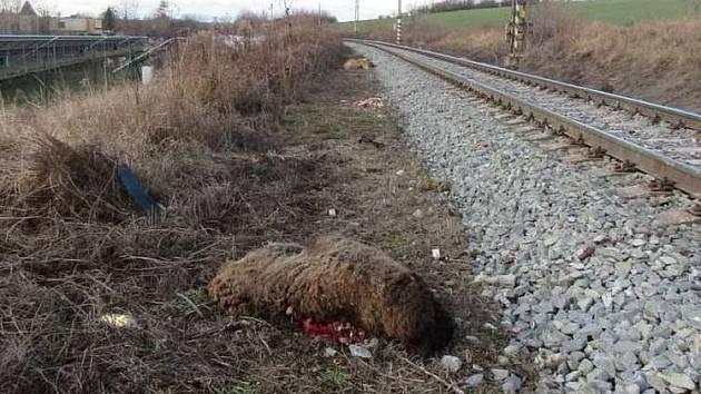 Ovce vběhly pod vlak, tři srážku nepřežily.