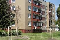 Výsadba na sídlišti Svornosti v Prostějově
