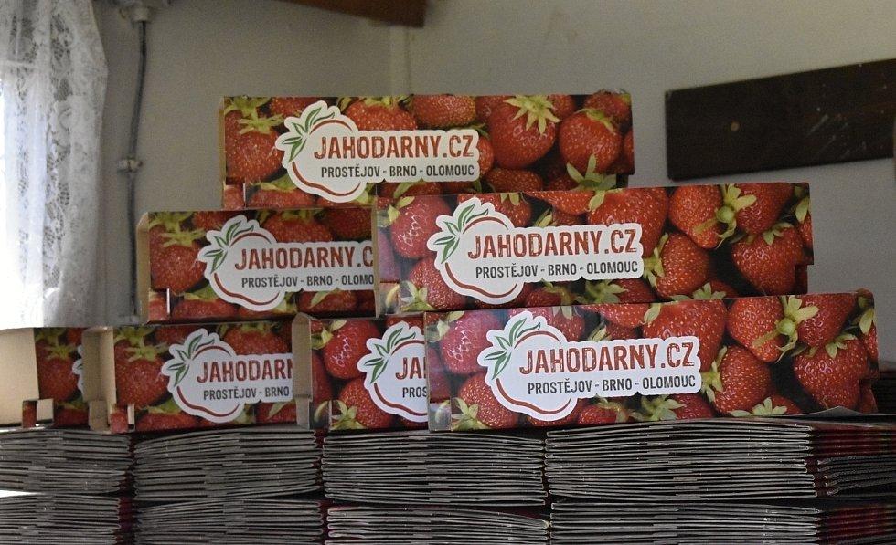V pondělí 14. června byl zahájen letošní samosběr jahod v Prostějově.