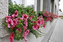 Truhlíky s květinami ve Smržicích