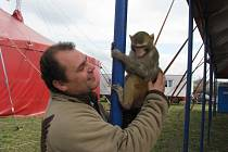 K tahákům cirkusu Carini patří lvi a unikátní vystoupení opice se smečkou psů.