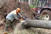 Na snímku lesní dělníci odstraňují polomy v lesích nedaleko Horního Štěpánova.