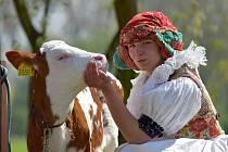 Zlatá farma ve Štětovicích hospodaří na 20 ha a zaměřuje se na chov skotu a výrobu mléčných produktů.