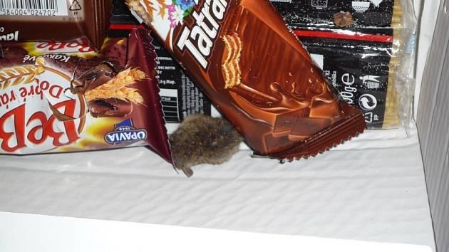 Hlodavci v prostějovském Intersparu - mrtvá myš v potravinách